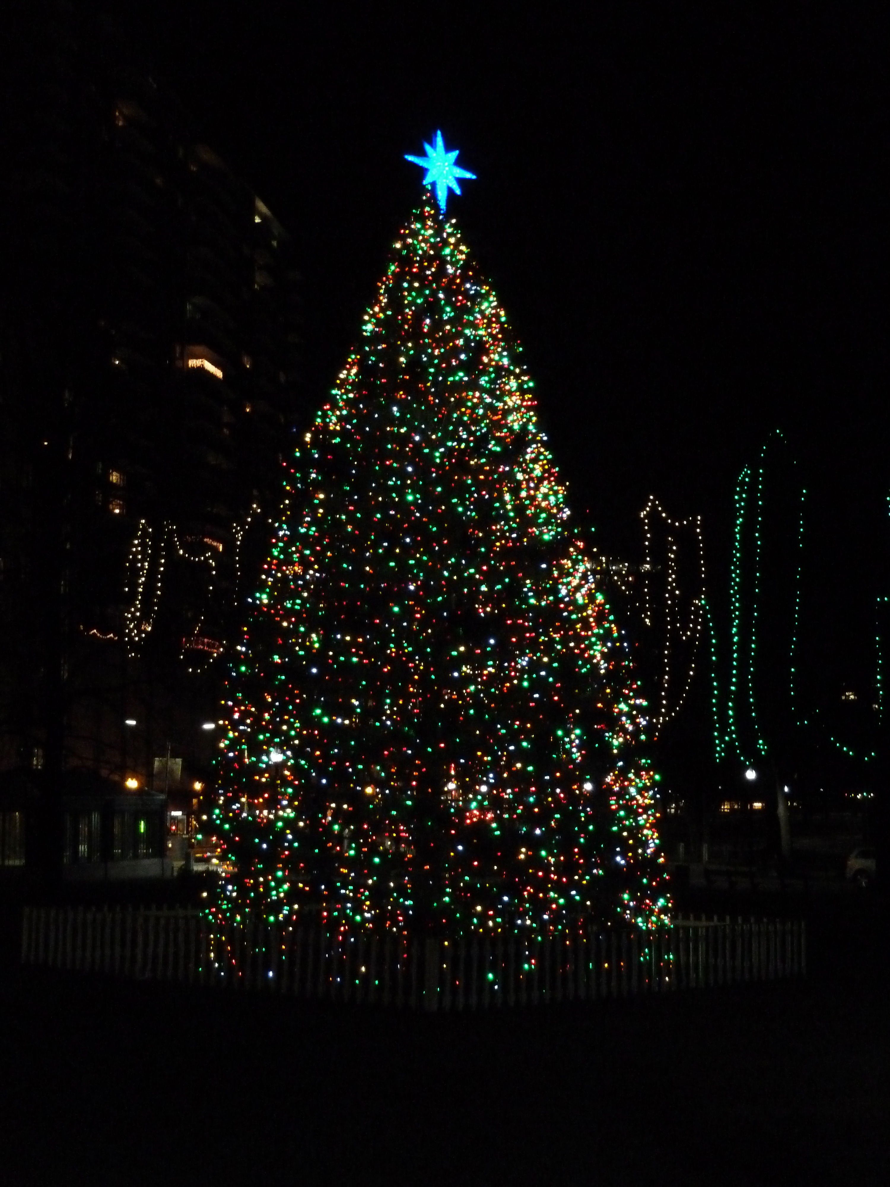 Christmas Tree in Boston Commons, a gift from Halifax given to Boston every year