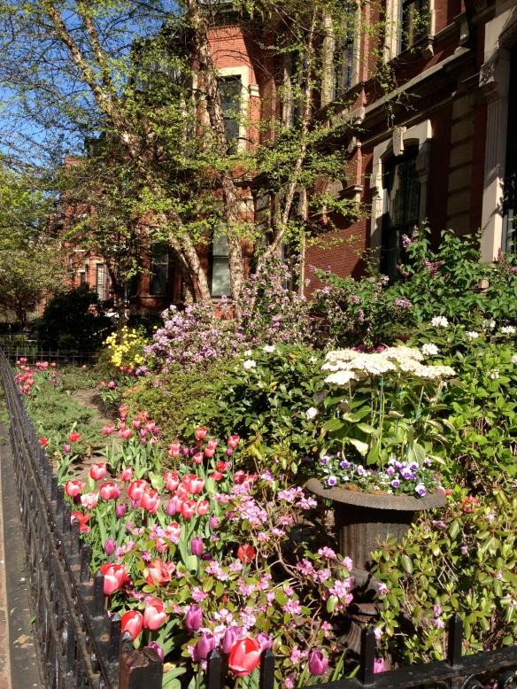 A glorious spring garden in the Back Bay