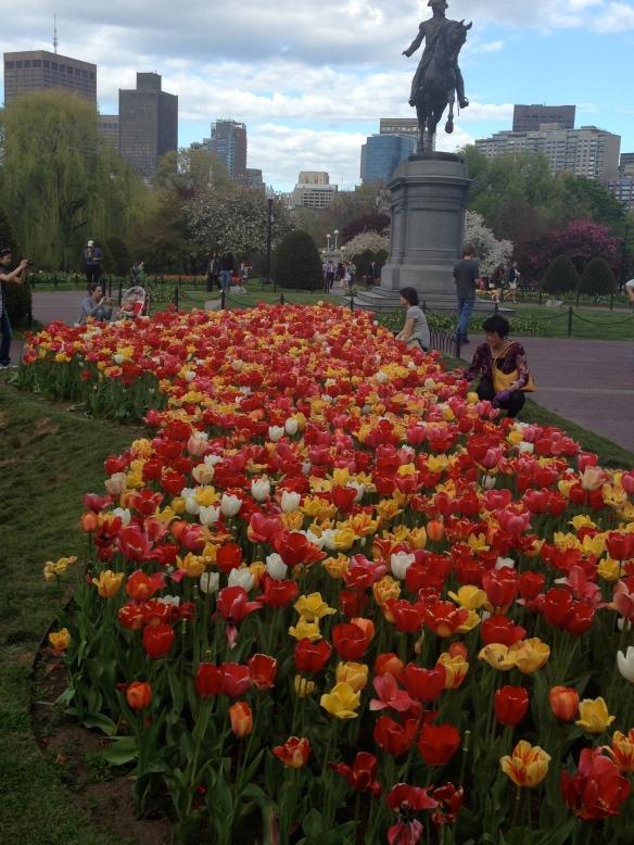 My favorite tulip bed